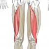 大腿二頭筋の7つの特徴!大腿二頭筋まとめ