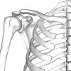 肩関節の解剖まとめ