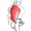 殿部の痛みに関連する!中殿筋の6つの特徴