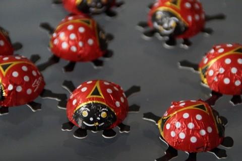 beetle-641159_640