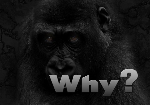 why-234596_640