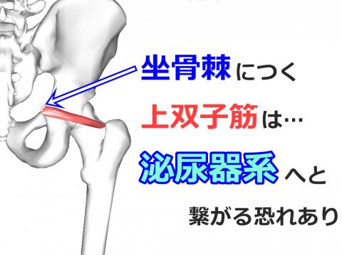 image (17)