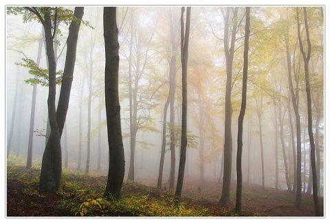 autumn-194834_640